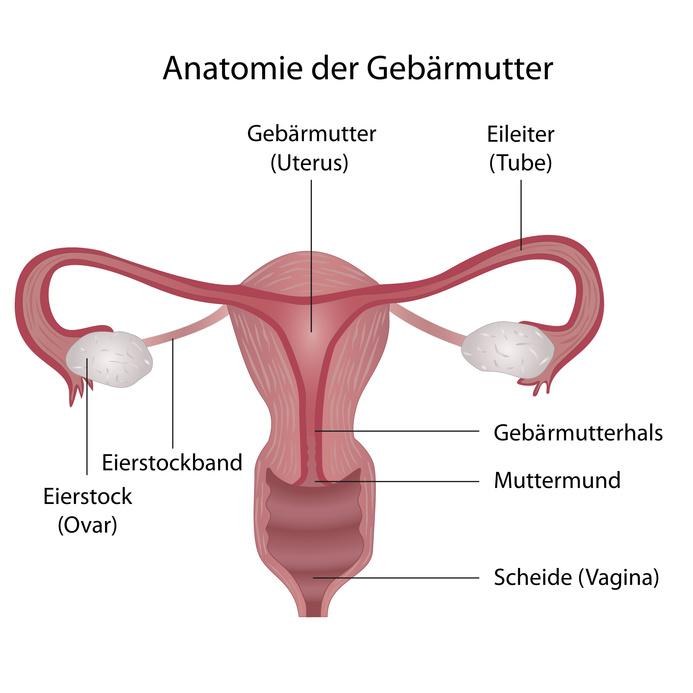 Gebärmutterhalskrebs (Zervixkarzinom) | Ursachen, Symptome, Therapie